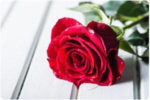 Herriman U T Orthodontist The Rose The Thorn The Bud